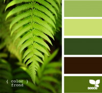 Design Seeds® | for all who ? color | color frond