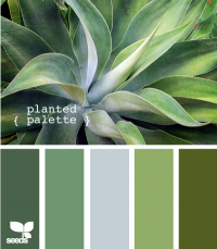 Design Seeds® | for all who ? color | planted palette