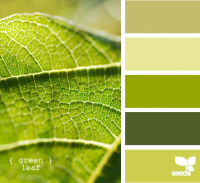 Design Seeds® | for all who ? color | green leaf