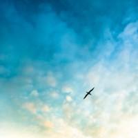 30+ Perfectly Captured Bird Photography - Blog of Francesco Mugnai