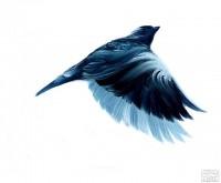 ADAM-S-DOYLE-BIRDS-10-z.jpg (640×528)