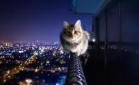 Marvelous Cat Photography | Abduzeedo Design Inspiration & Tutorials