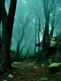 Into the Mystic, Sintra, Portugal | See More Pictures | #SeeMorePictures