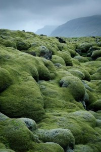 Awesome and Creative Photos with Moss (15 Pictures)   See More Pictures   #SeeMorePictures