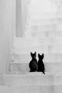 lo-fi Camera Life | petapeta: ZsaZsa Bellagio
