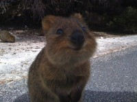 Top 15 des animaux qui sourient, c'est con mais ça fait du bien | Topito