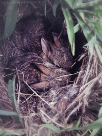 Baby Bunnies! by ~SerialDreamer1
