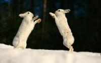 bunnies animals rabbits - Wallpaper (#270152) / Wallbase.cc