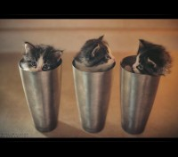 cup_of_kittens_by_mrbee30-d6cy3tr.jpg (900×793)
