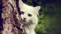 gato2 - Arturo *-* - Galeria - Dapost!