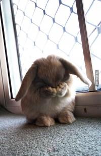 9GAG - Shy Bunny
