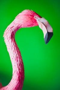 Des oiseaux en papier - La boite verte
