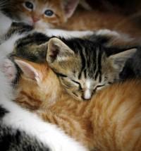Cats — The Forgotten Garden