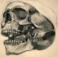 Charcoal and Bone V by ~napoleoman