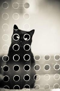 #cat | Cats
