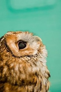 50 Beautiful and Stunning Animal Photography | The Design Inspiration