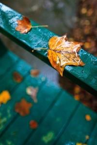 On the Bridge Handrail | Amazing Pictures