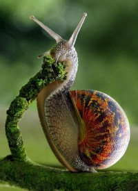 The Snail | Amazing Pictures