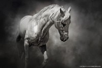 Black and White Horse - 54ka [photo blog]