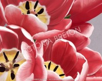 Pink Tulips 16 x 20 Digital Painting Print by vbdigitalpaintings