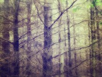 Deep in the forest Art Print by p+ photography | Society6