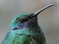we won't run - anythingavian: Hummingbird Close up...