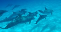 Wild Dolphins - Guardians of the Sea - explore