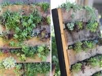 Pallet Vertical Garden DIY Tutorial | Hip Home Making
