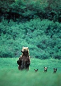 Amoebas Amoebas Everywhere! • Bear family pinterest.com