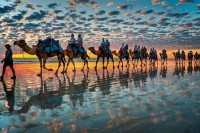 Amoebas Amoebas Everywhere! • hexapoda: Camels at Sunset, Cable Beach W.A (by...
