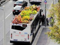 Amoebas Amoebas Everywhere! • Garden Bus