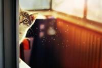 tumblr_miu9b4e29e1qjev1to1_1280.jpg (JPEG Image, 900×600 pixels)