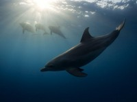 Dolphin Picture -- Underwater Photo -- National Geographic Photo of the Day