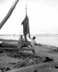 kuba fisherman - Sök på Google