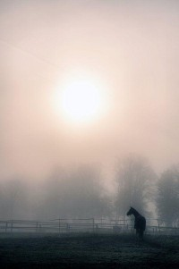 ? Horse , alone in the mist | Color | Serenity