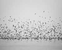 black-white-wall-birds-lake-and-animals-nature-image-hd-344113.jpg (2560×2048)