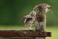 500px / a little peck... by Mark Bridger
