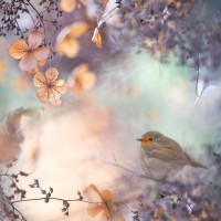 500px / Hydrangea fantasy by Teuni Stevense