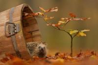 500px / Autumn garden by Edwin Kats