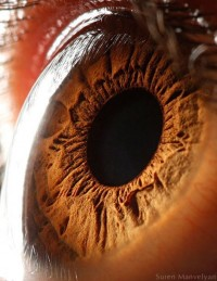 Close nos olhos - por Suren Manvelyan | We Heart It