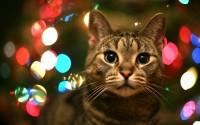 Cats Wallpapers Apple Mac Nikon Dslr Bokeh Shooting-397738522.jpeg (1920×1200)