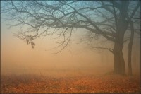 autumn fog | autumn