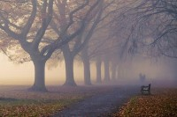 Autumn Fog (by Strep72) | Photography