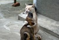 Puppy Kitty Love - Imgur