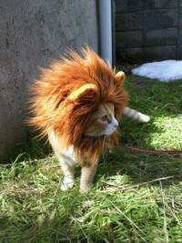 I'm a Lion, Meow - Imgur
