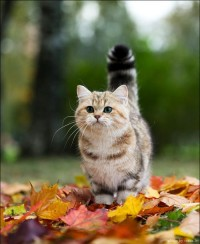 cat, cute, fluffy, leafs, nature - inspiring picture