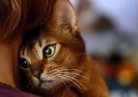 animal, beautiful, beauty, cat, cute, kitty - inspiring picture