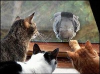 animals, cat, cats, funny, humor, nature - inspiring picture