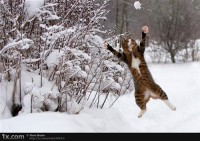Winter in Germany - a photo about cat, snow, animals on CommunityOfSweden.com