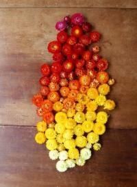 Toutes les tailles | straw group | Flickr: partage de photos!